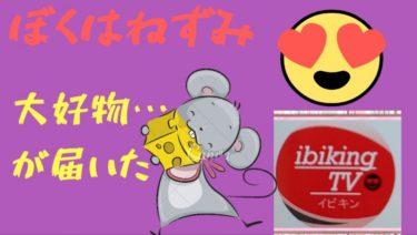 【チーズざんまい】ぼくはねずみイビキンの大好物!!▼北海道花畑牧場お楽しみ福袋開封!